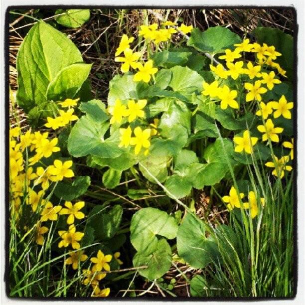 Swamp Flowers