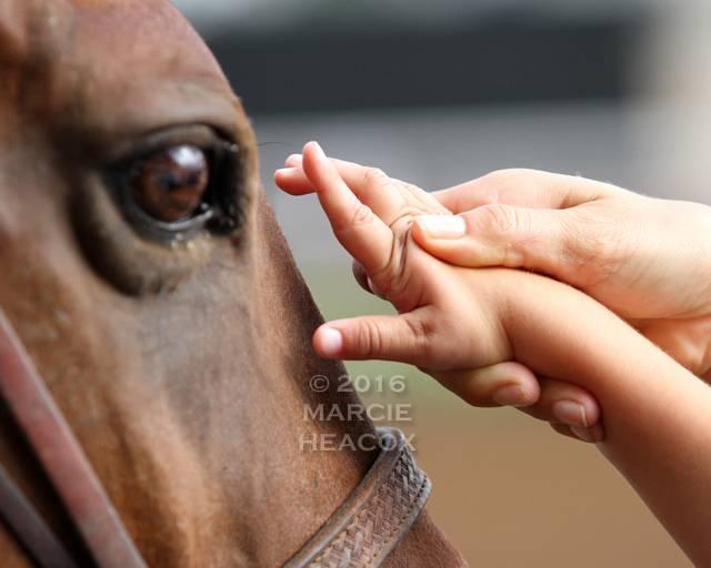 Pony Petting
