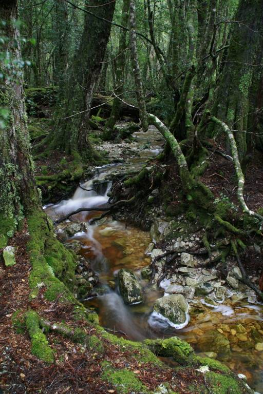 Plateau Creek 2