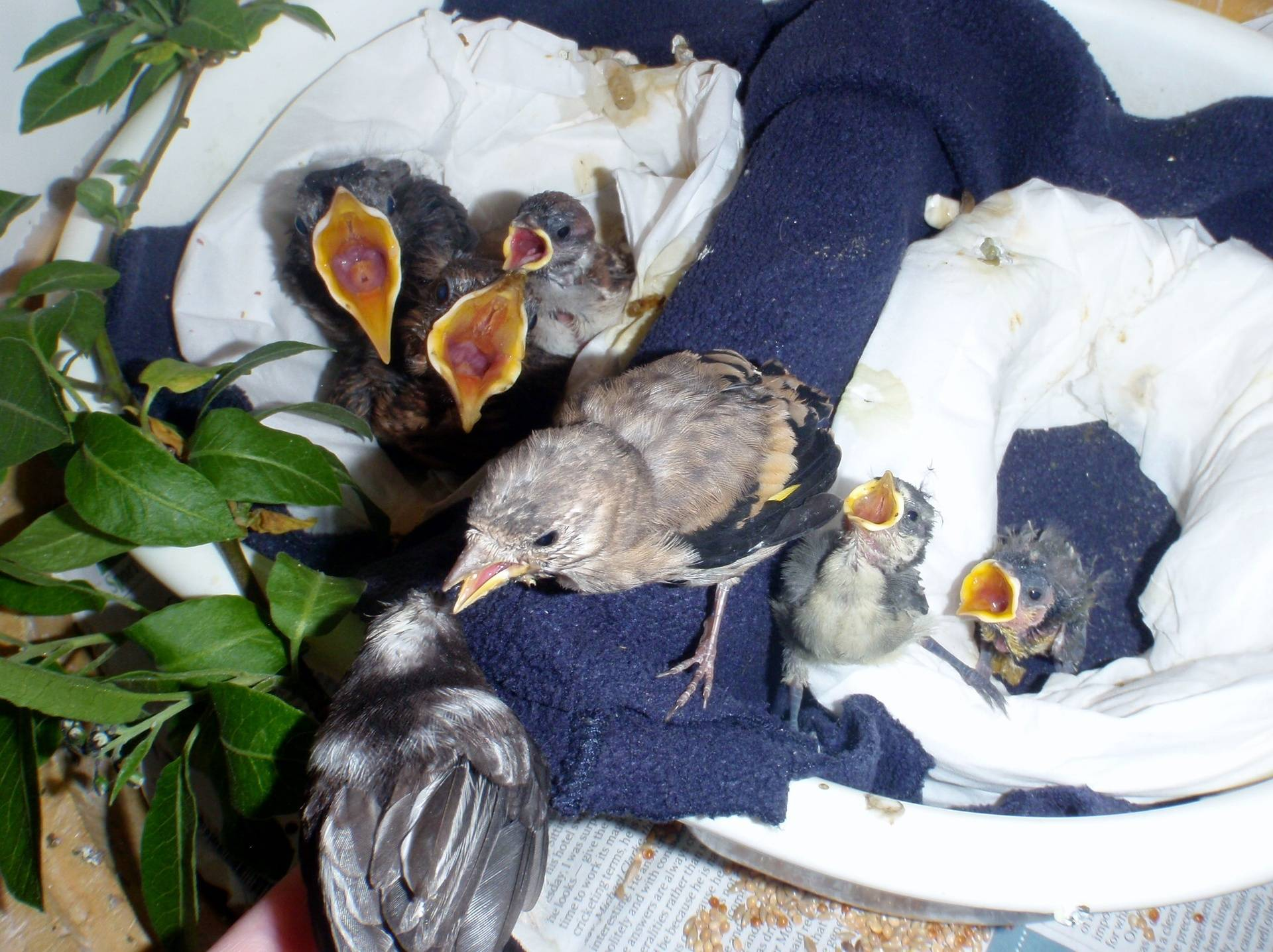 Mixed Nest of Orphans