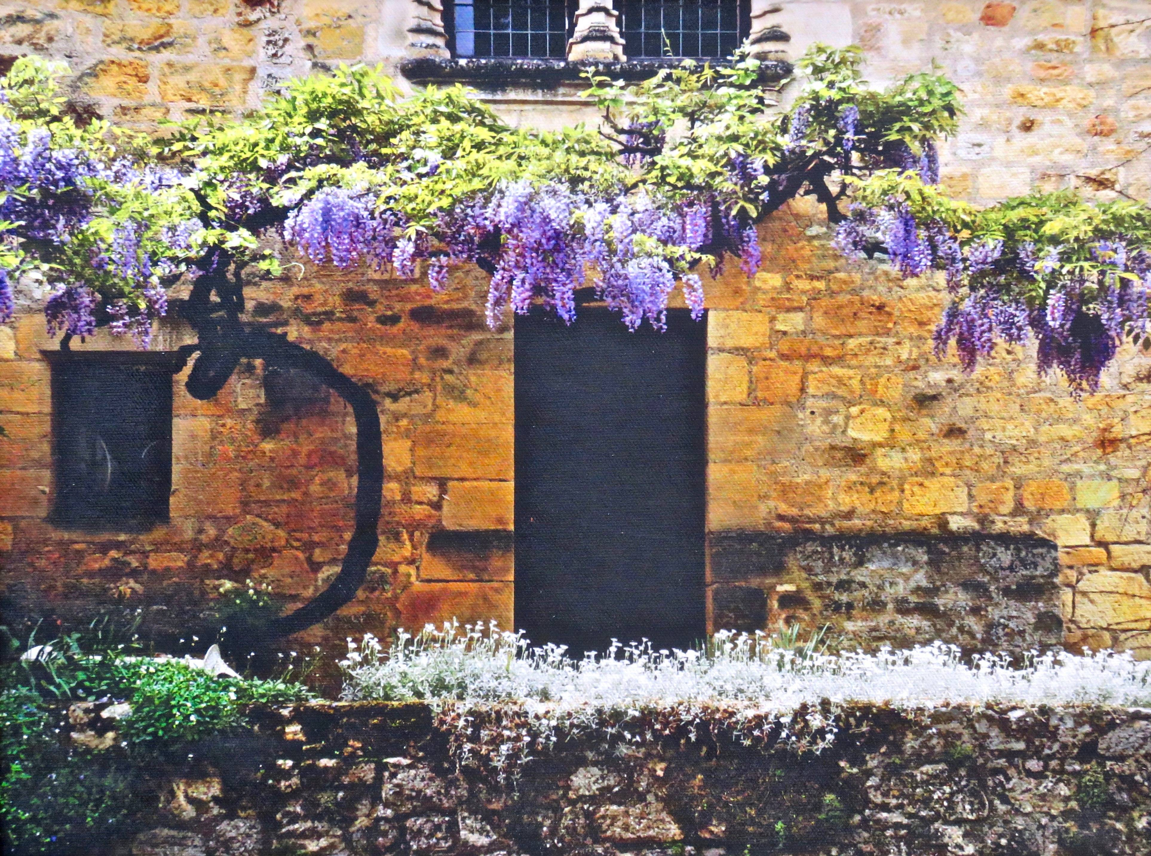 Wisteria in Domme, France