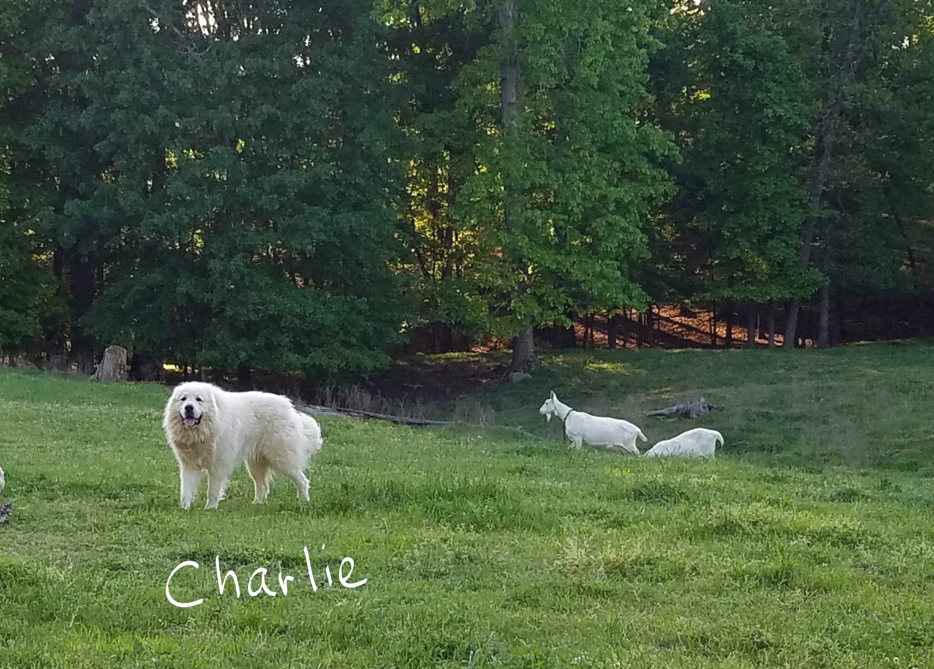Charlie, sire