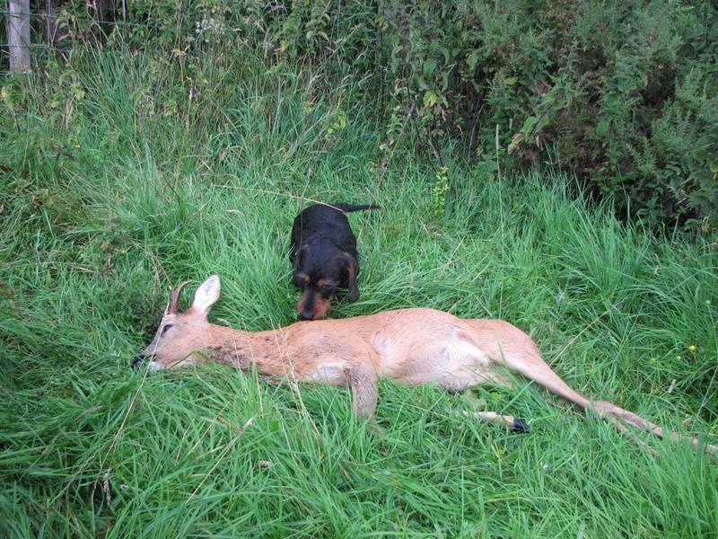 Ib with buck Aug