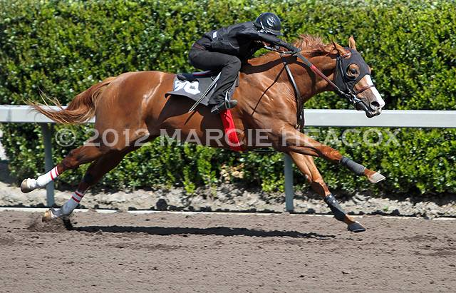 Barretts Sale Breeze - Outstretched & Airborne