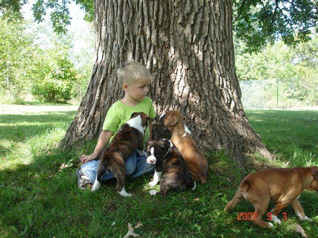 Brodey and Puppies