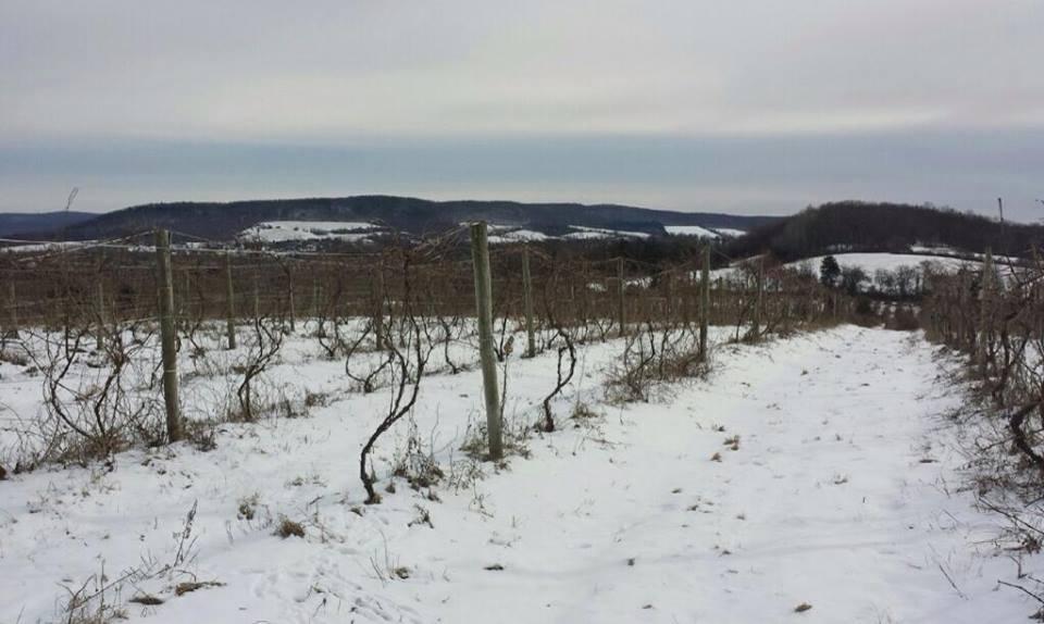 Amenia in the winter time