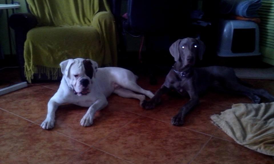 Coque y Rey