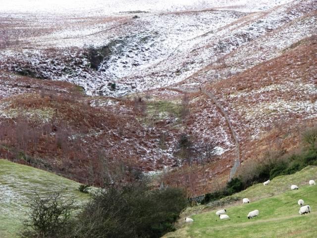 Tree plantation in winter
