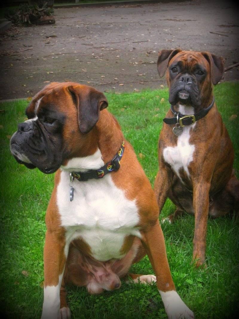 Brynn & her sire Danny