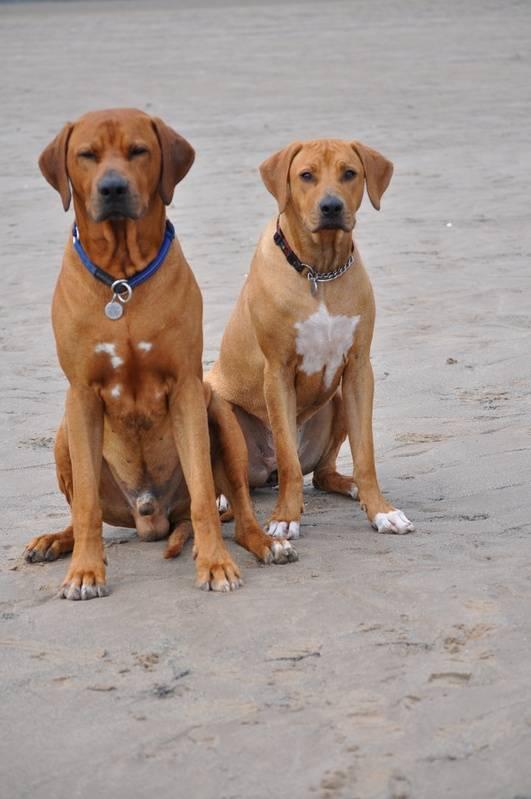 Elvis & Sookie