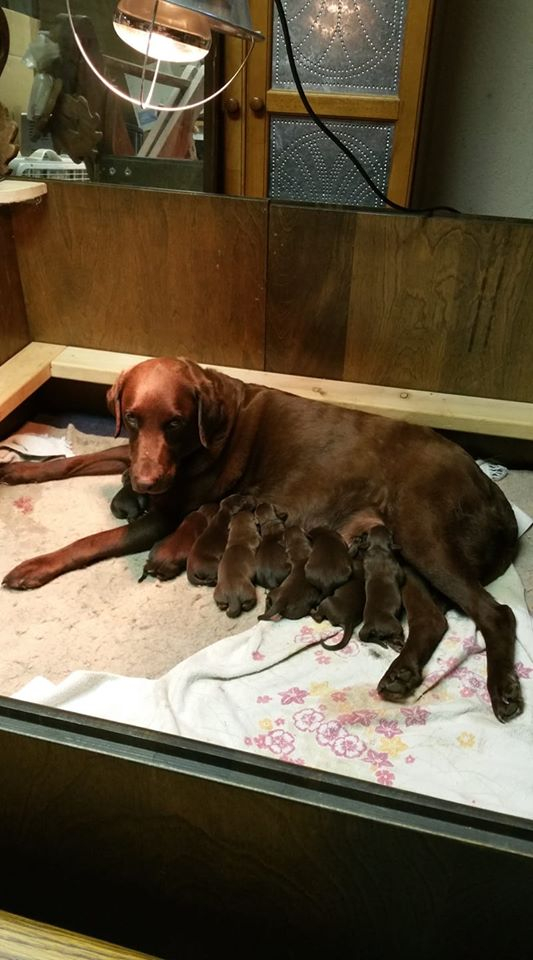 Coco's Last Litter of 10