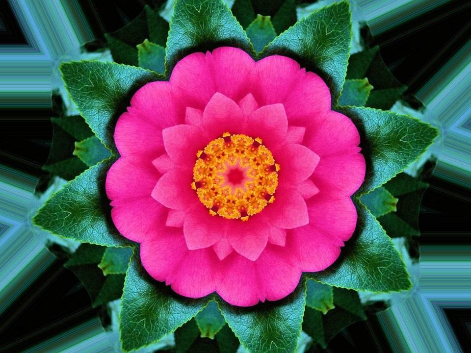Kaleidoscope Camellia