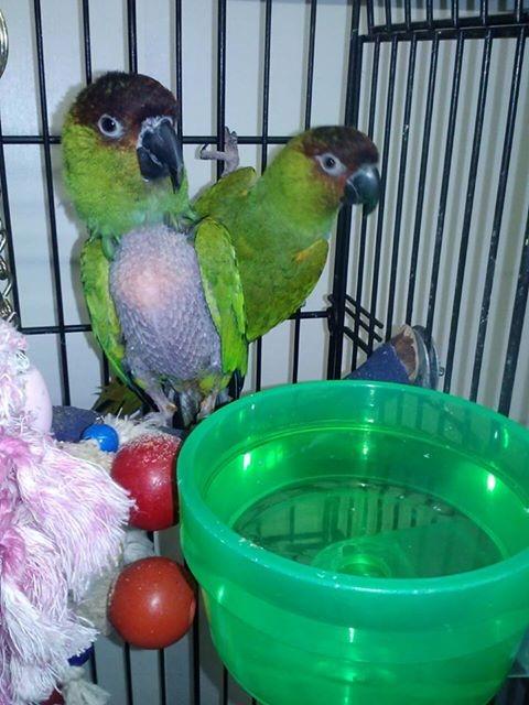 Corky and Sammy