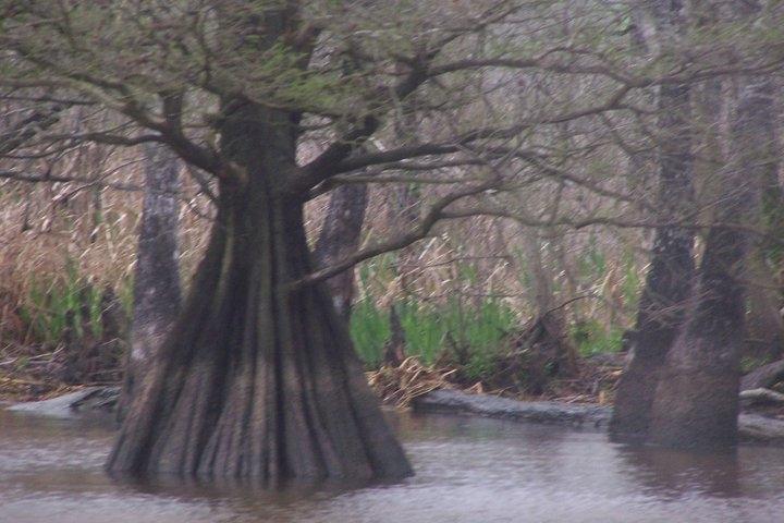 Swamp boat rides