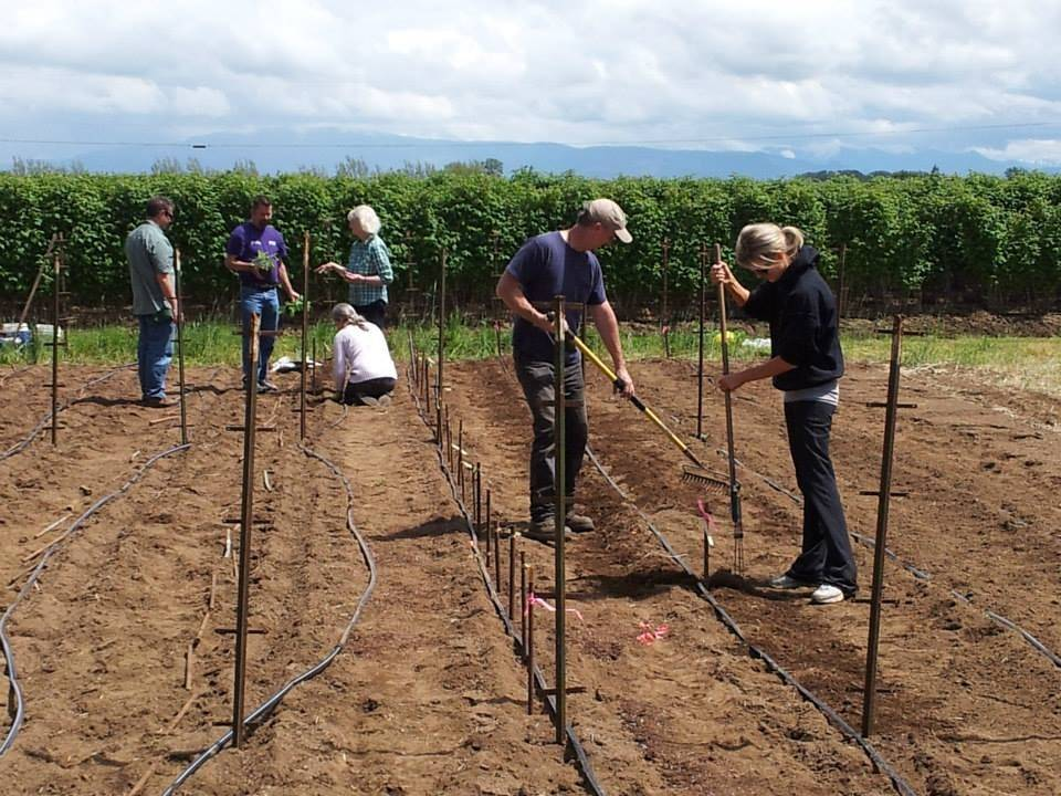 Getting Dahlia Garden Ready to Plant