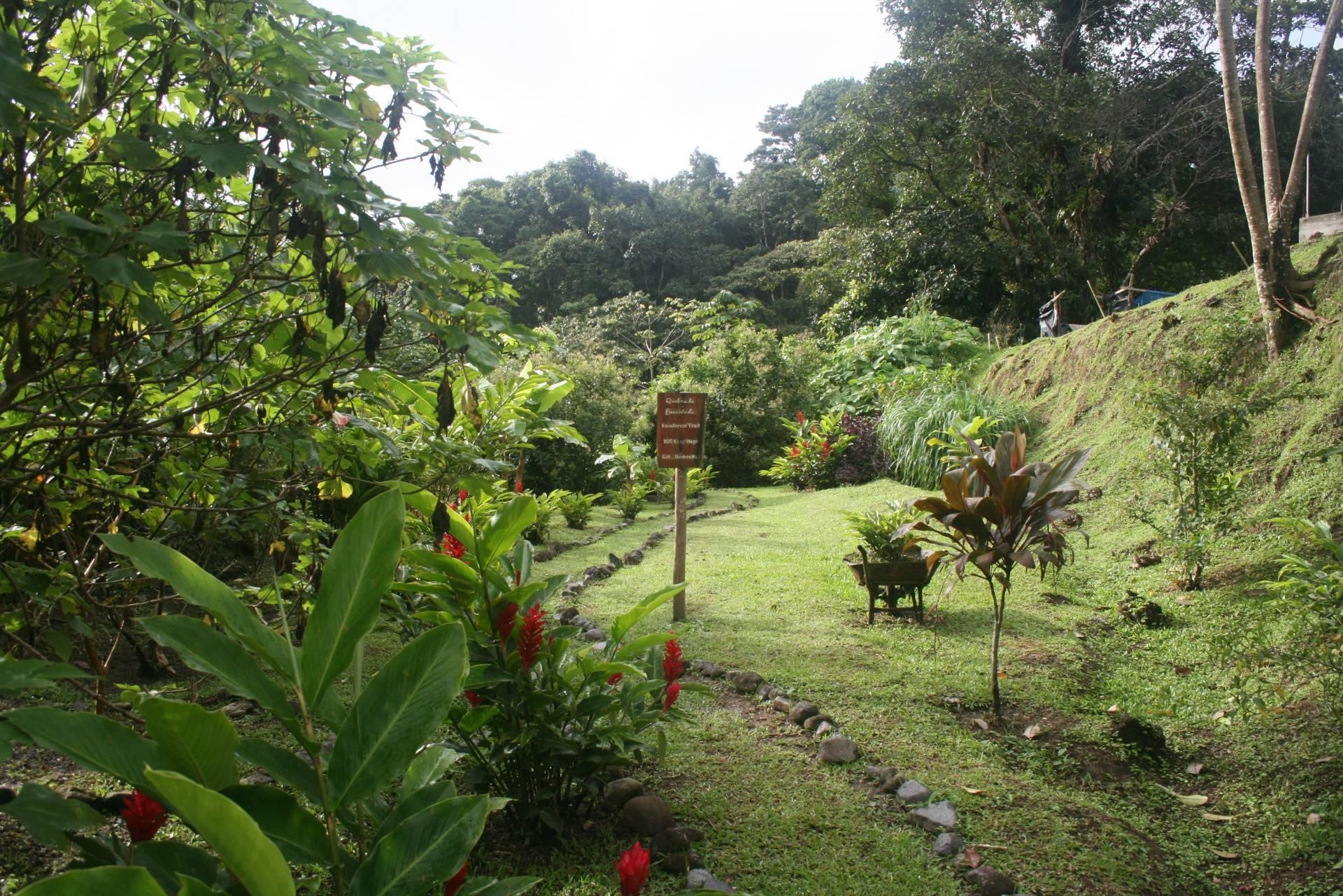 Rainforest Hiking Trail