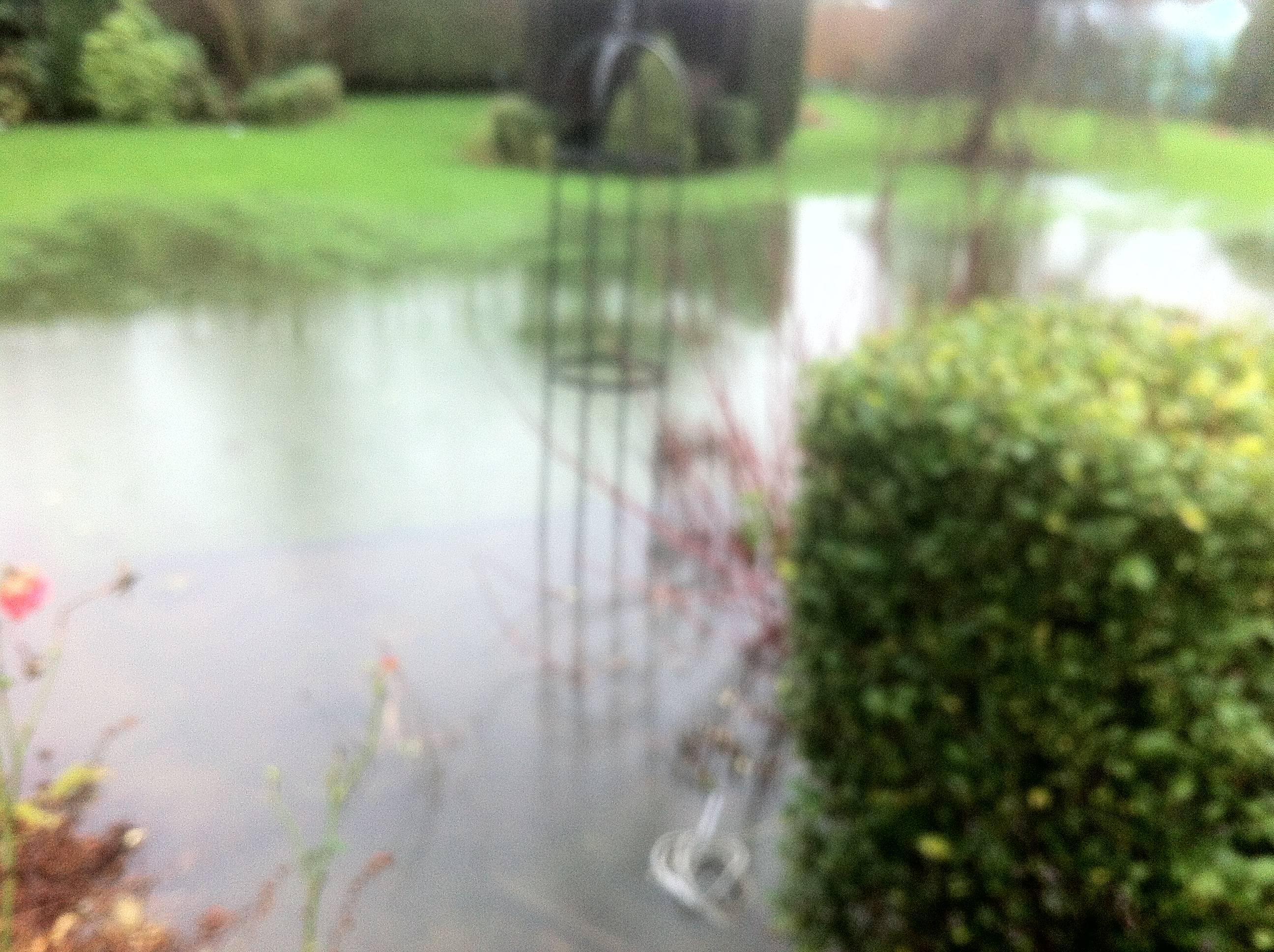 Flooded winter garden