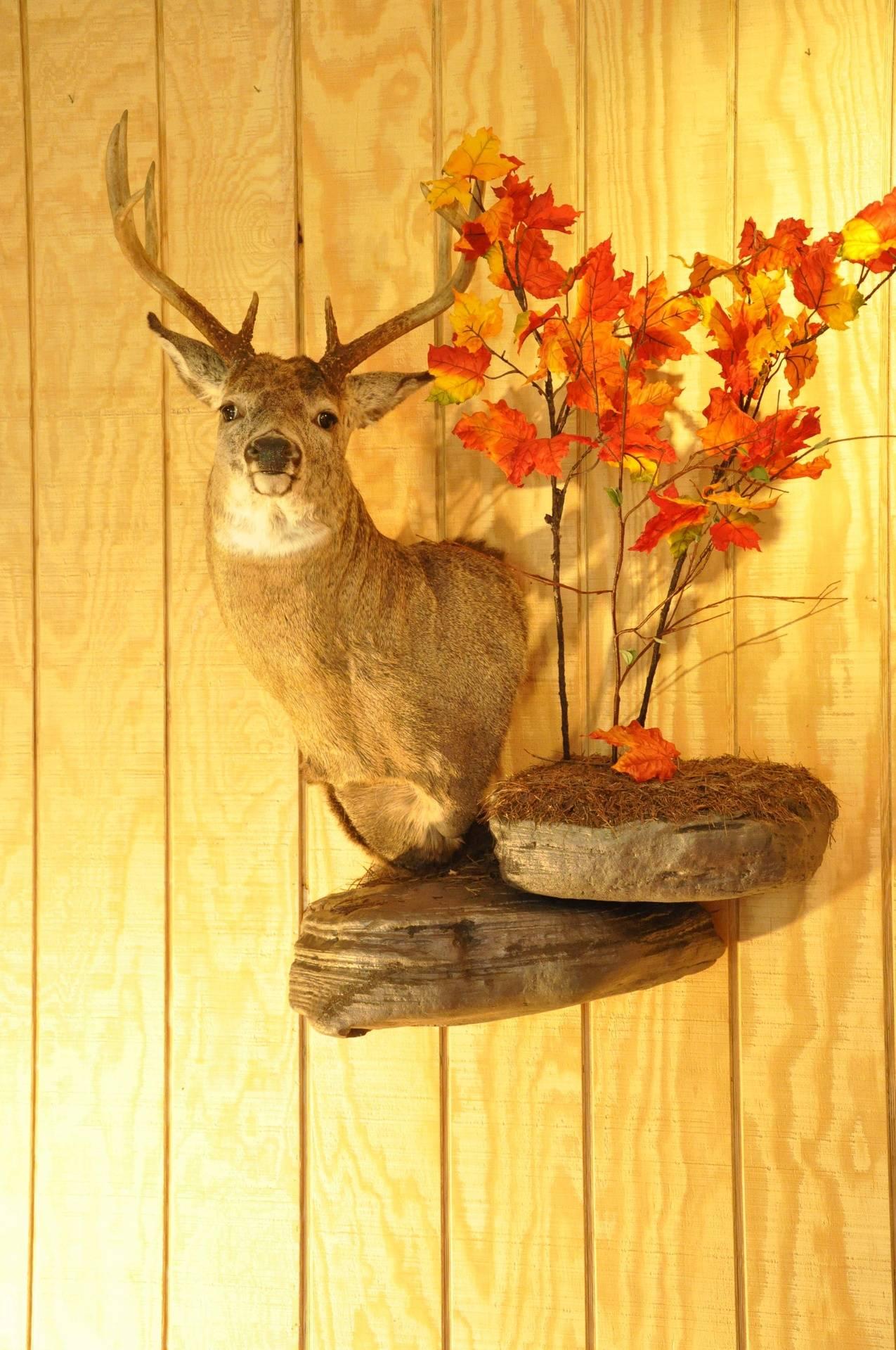 Buck on Wall pedestal