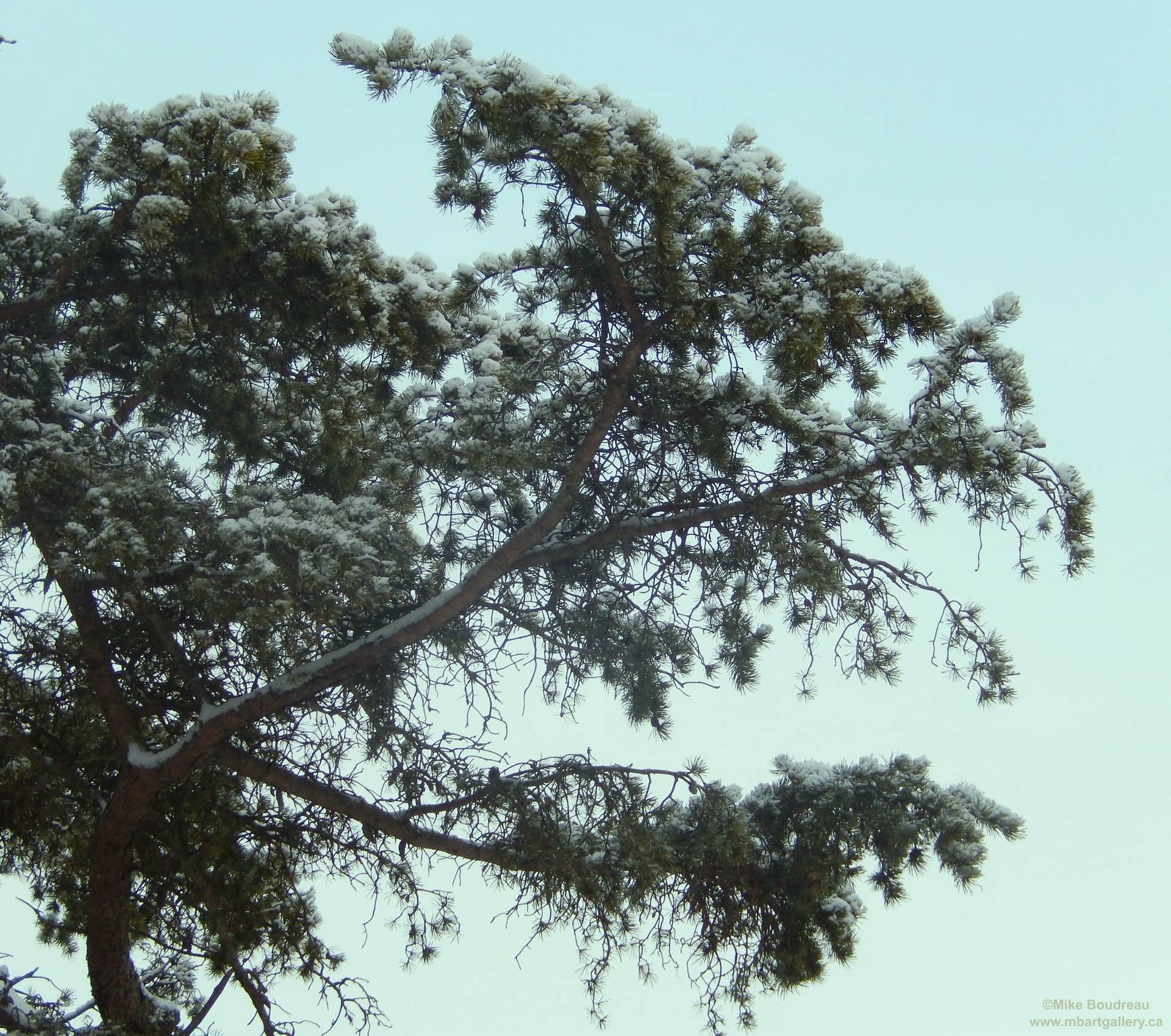 Trees on Rocky Bluff, Saint John NB