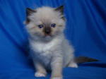 Seal Mitted Baby