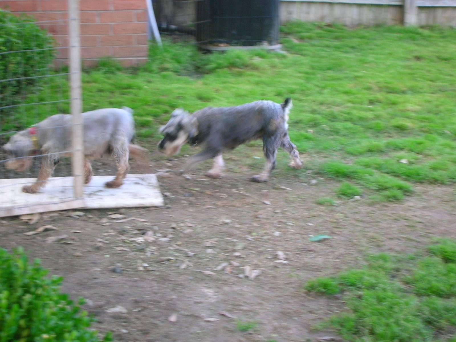 Becca and Shotsie