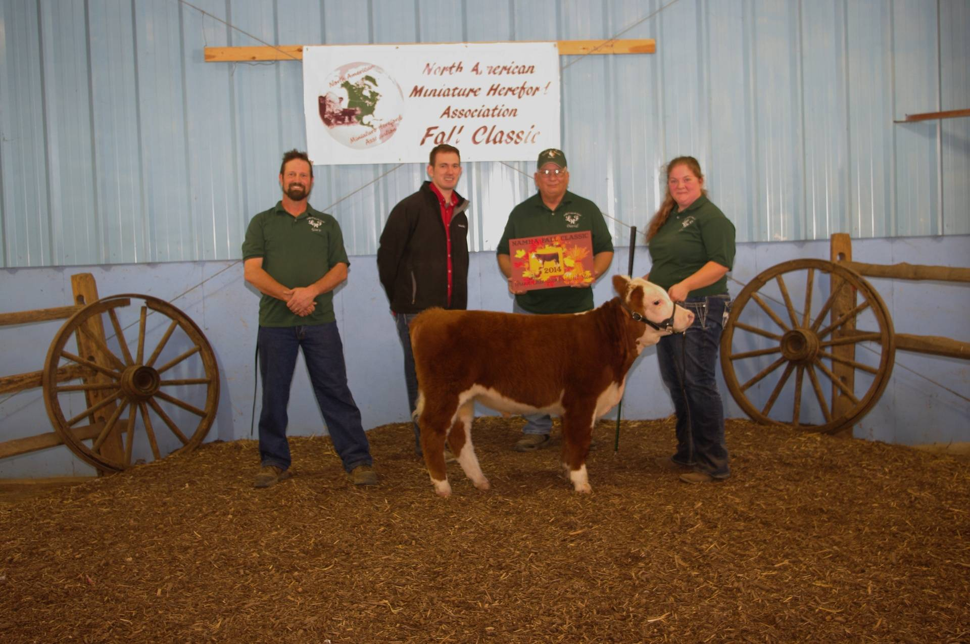 Tigger - Grand Champion Prospect Market Steer - 10/11/14