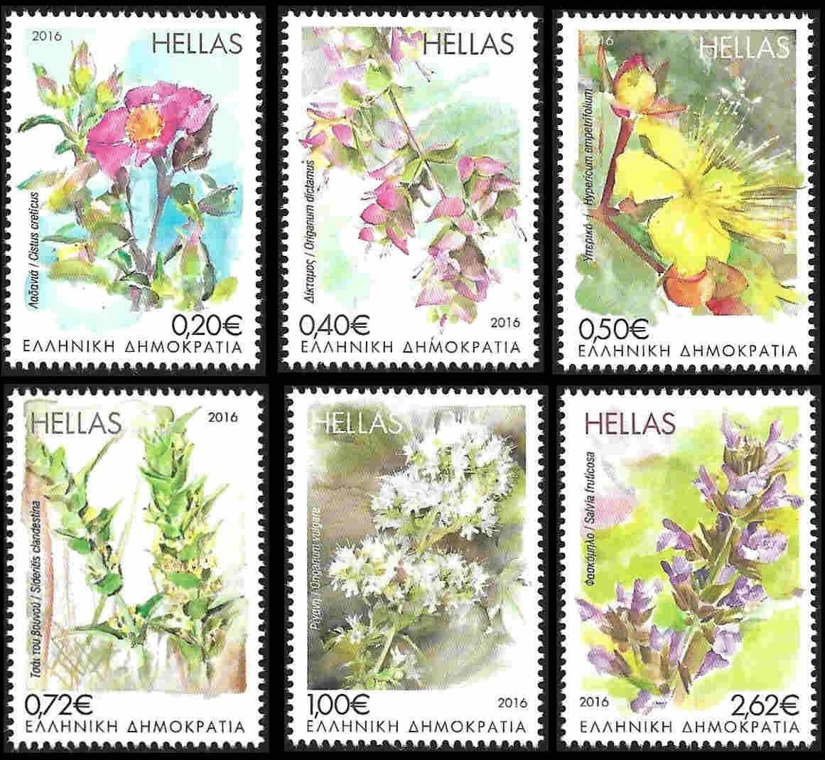 15th December 2016: Flowering Herbs of the Greek earth