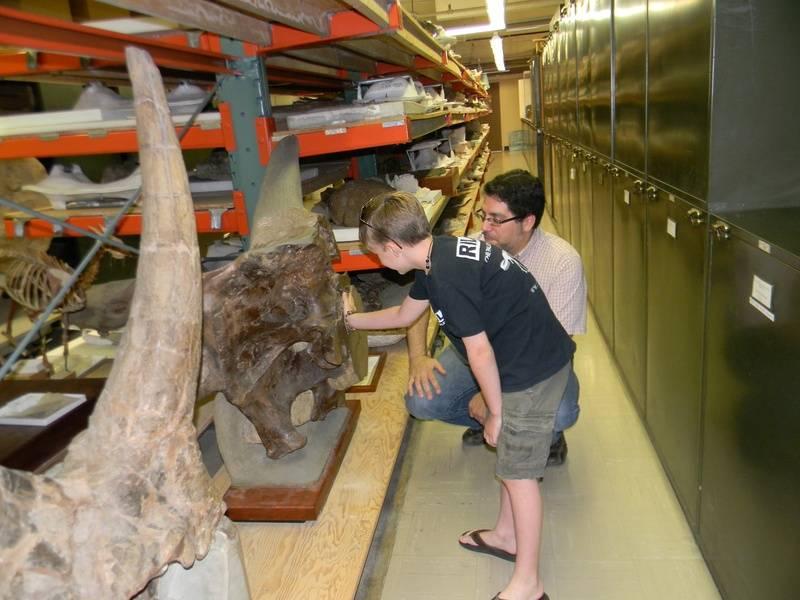 Triceratops Brain Case