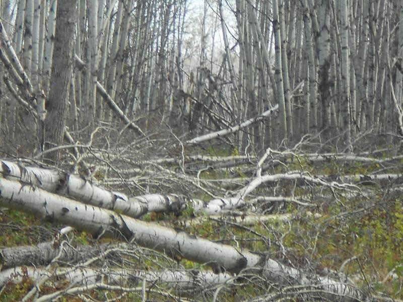 Cowan Trail Damage