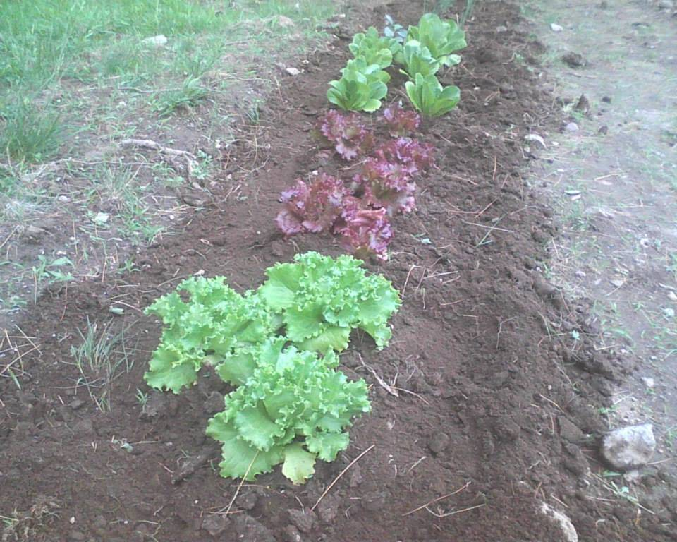 Salad row