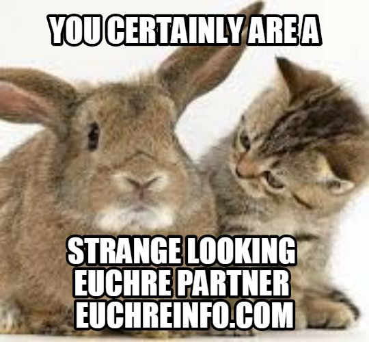 You certainly are a strange looking Euchre partner.