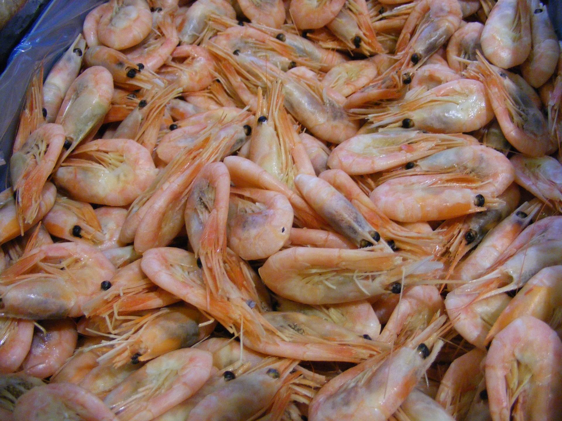 greenland prawns