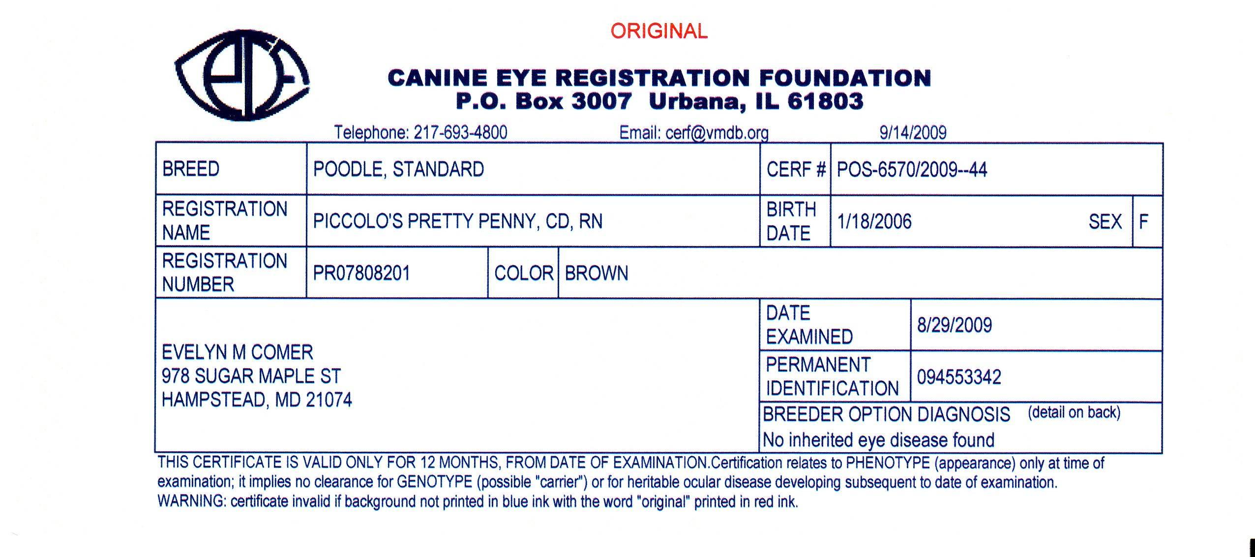 Penny CERF eye