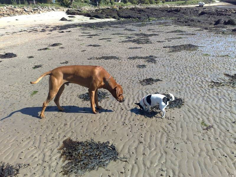 Wilma shows Elvis how to dig