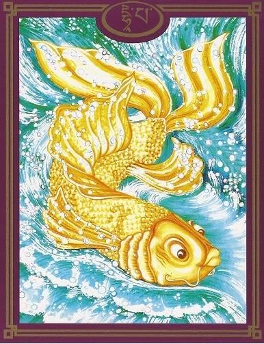 63 DHI PA le poisson femelle en or