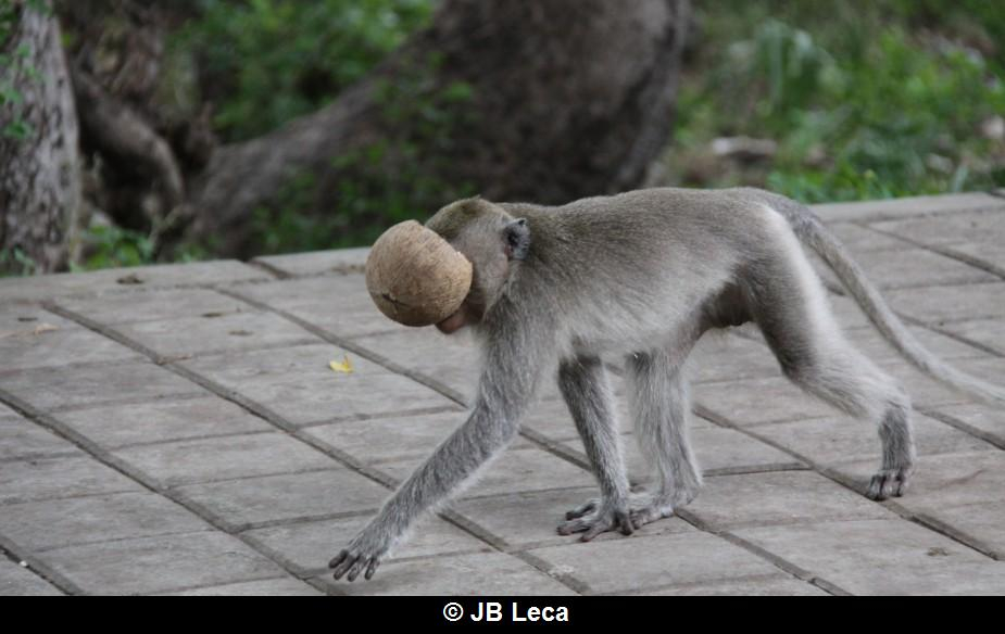 eye-covering play with empty half coconut shell (Pulaki)