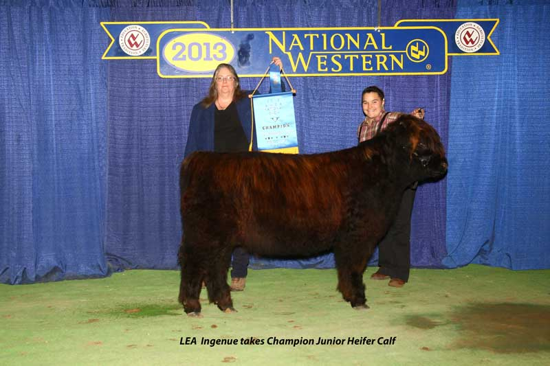 Ingenue as Champion Jr. Heifer Calf
