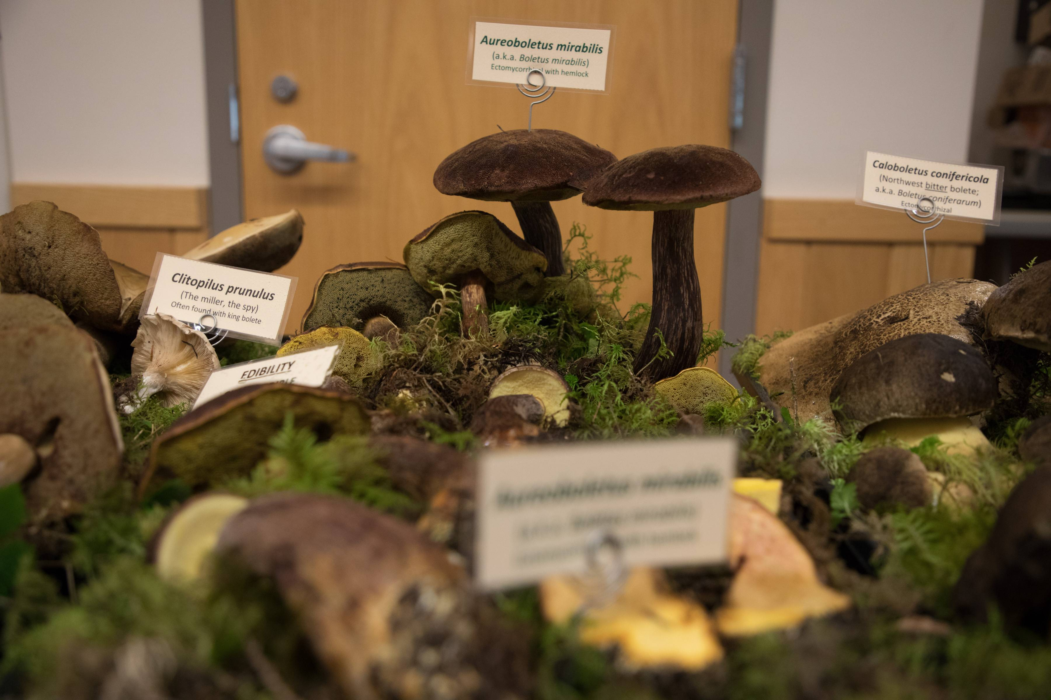 Display boletes
