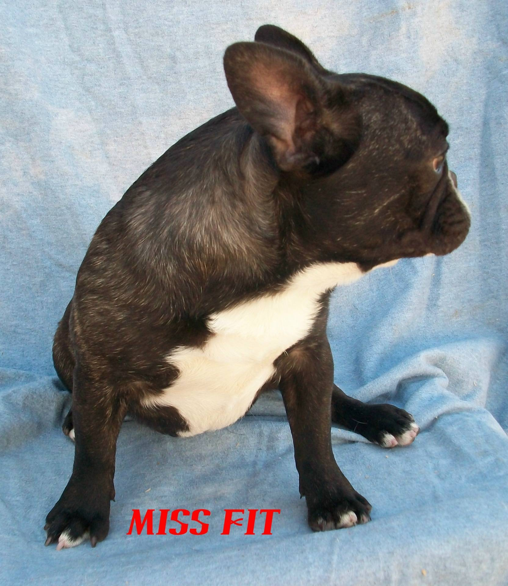 ADF CH BUTTERBALL MISS FIT