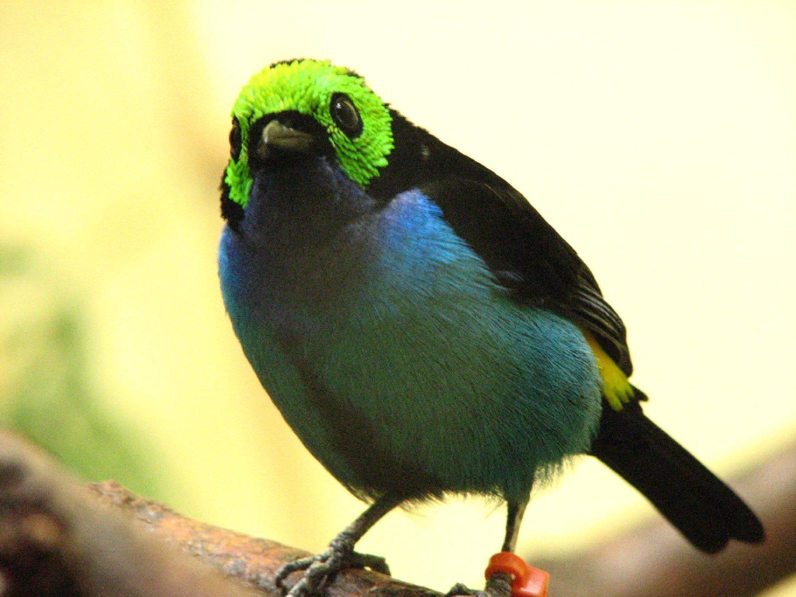 Green Head Bird