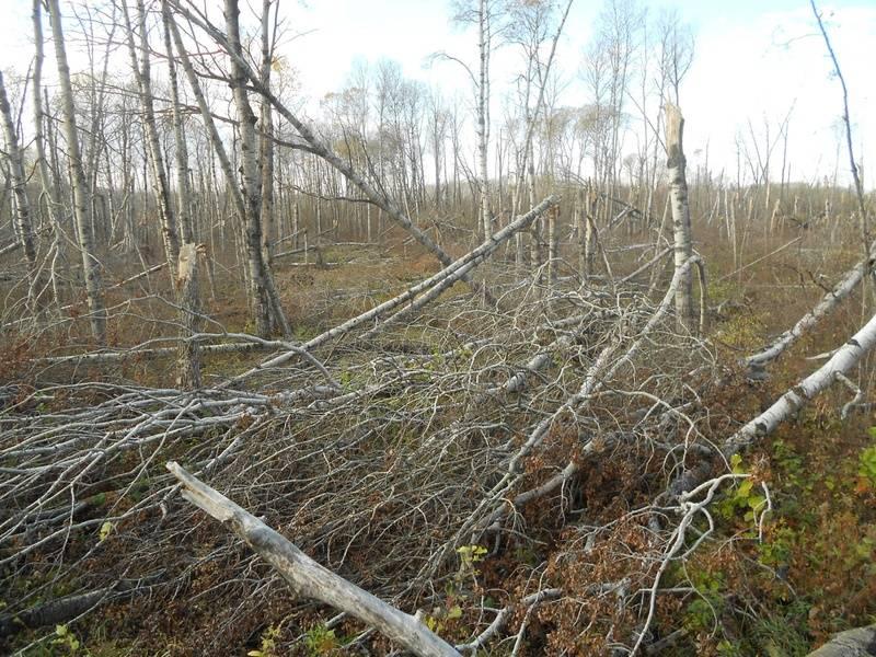 Cowan Trail Damage