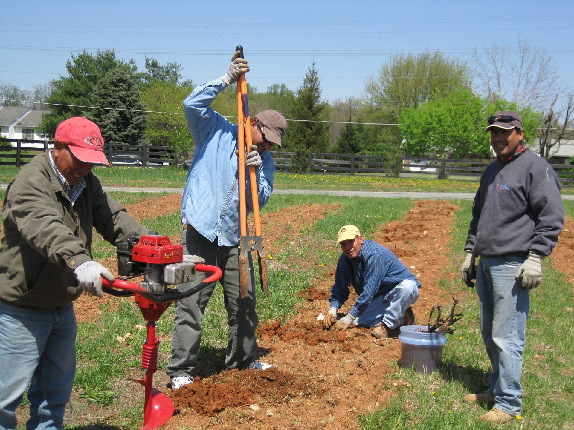 Planting First Grapevine
