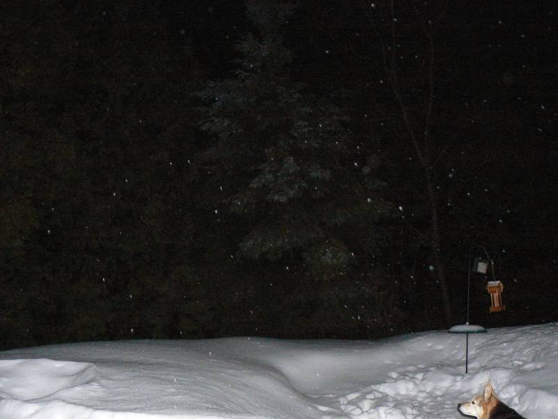 Holly watching orbs and snow