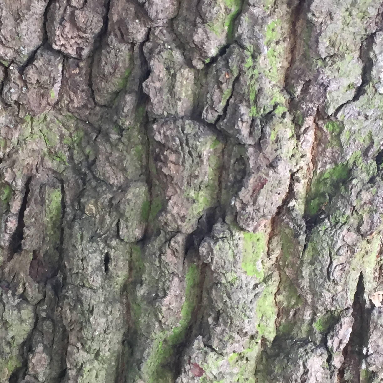Elm Pakl abstract photograph