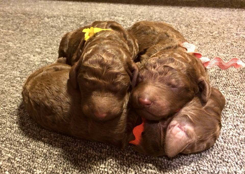 Apparently Orange makes a good pillow! The three girl together.  4 days old.