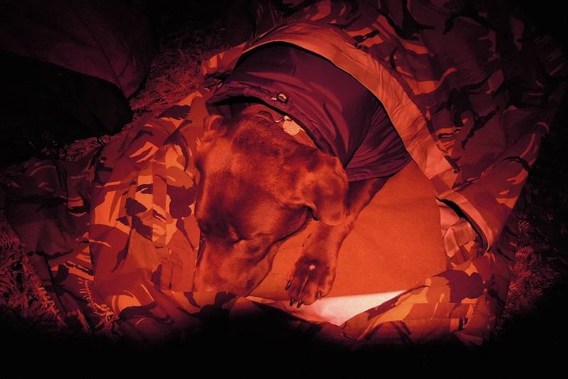 Harpo in his wild camping bed. Thermarest, dog coat, goretex bivvy - snuggy dog