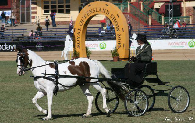 Brisbane Royal 2009