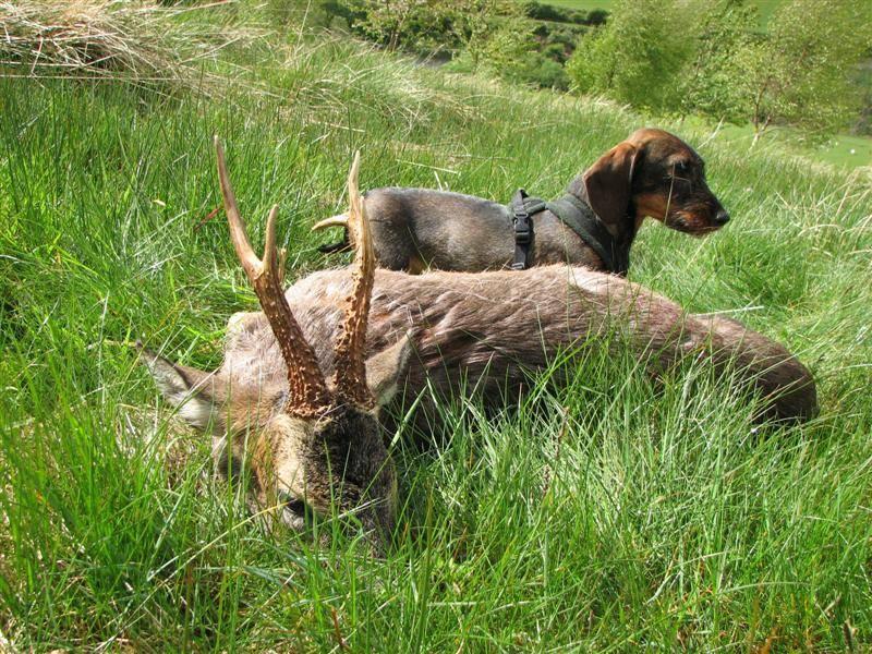 aya with buck 09