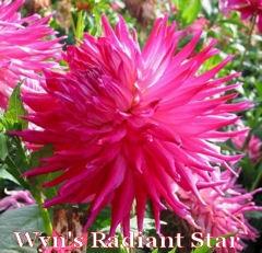 Wyn's Radiant Star-A IC DkBl Pr/W