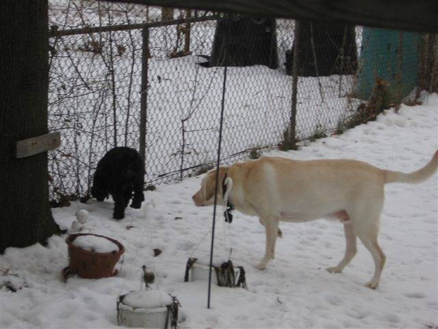Whats more interesting? snow or the other dog?